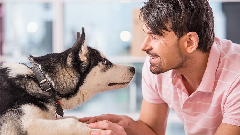 В Домодедово можно снизить стресс перед полетом с помощью собак